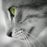 http://avatarochka.ru/_ph/23/1/457181885.jpg